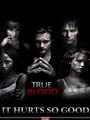 True Blood Seasons 1-5 DVD Boxset